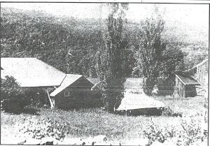 Northern light Joy Farm